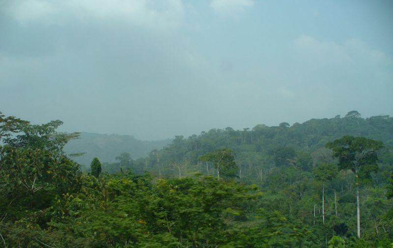 Cameroon_rainforest