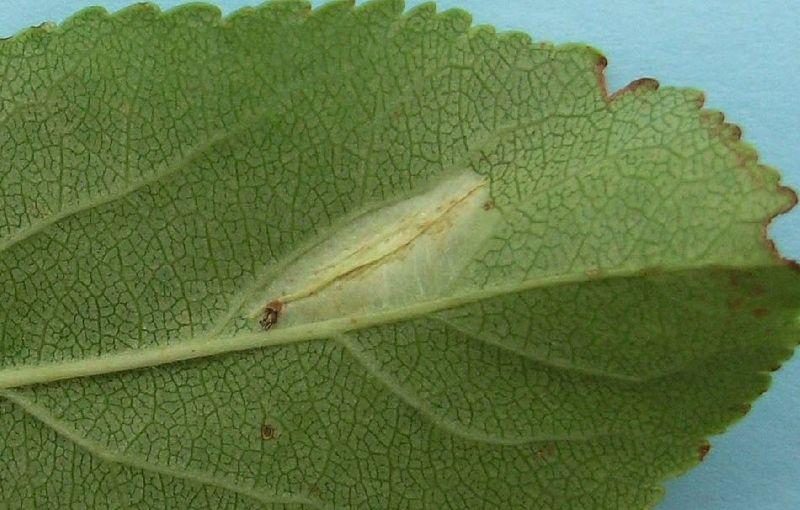 Mine on green leaf
