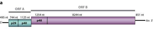 Schematic genome