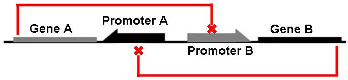 Fig1_model_X