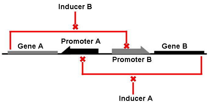 Fig2_inducer-X
