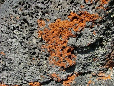 Reddish-colored_lichen_on_volcanic_rock