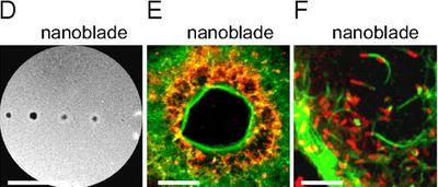 DEF_nanoblade