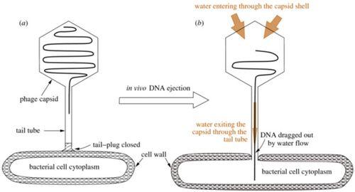 Hydrodynamics model