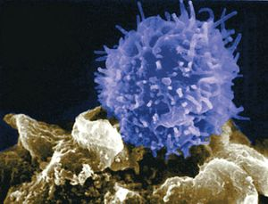 T-lymphocyte