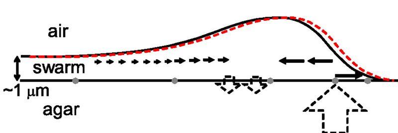 F4 distances