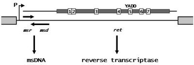 Fig. 2. Retron_organization
