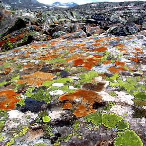 Ecology_lichen