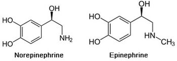 Epi_structure
