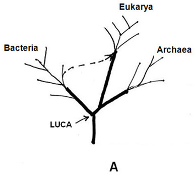 Fig-1A