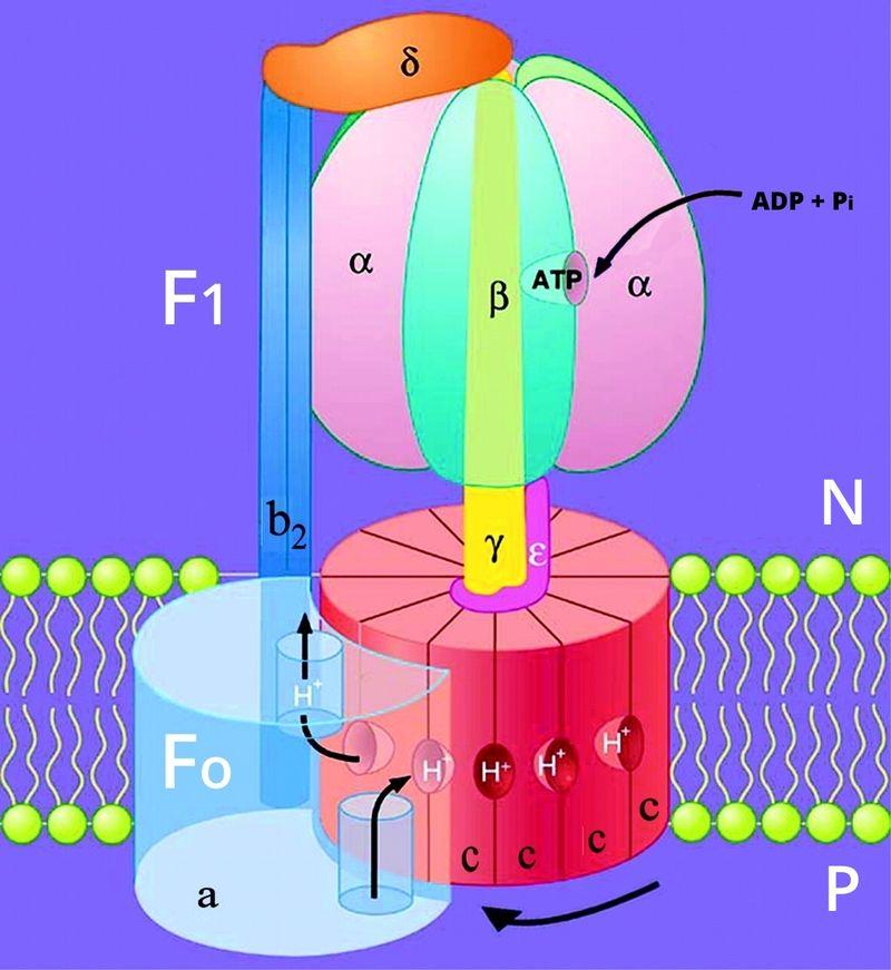 ATPase_Fig3