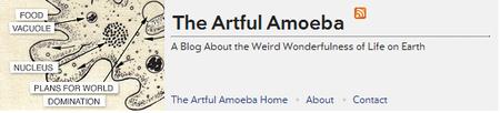 The_artful_amoeba