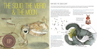 Squid_vibrio_moon