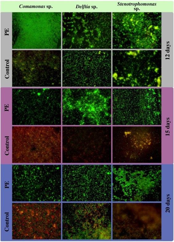 Fig2-live-cells