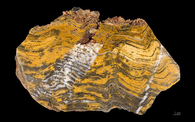 Fig.1. Stromatolite Fossil2