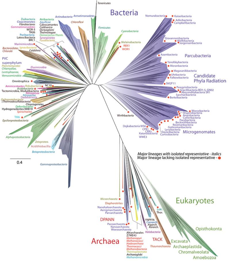 Fig.5. Tree of Life