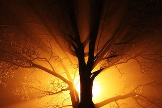 Light_through_tree