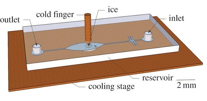 Fig 4 cofd finger
