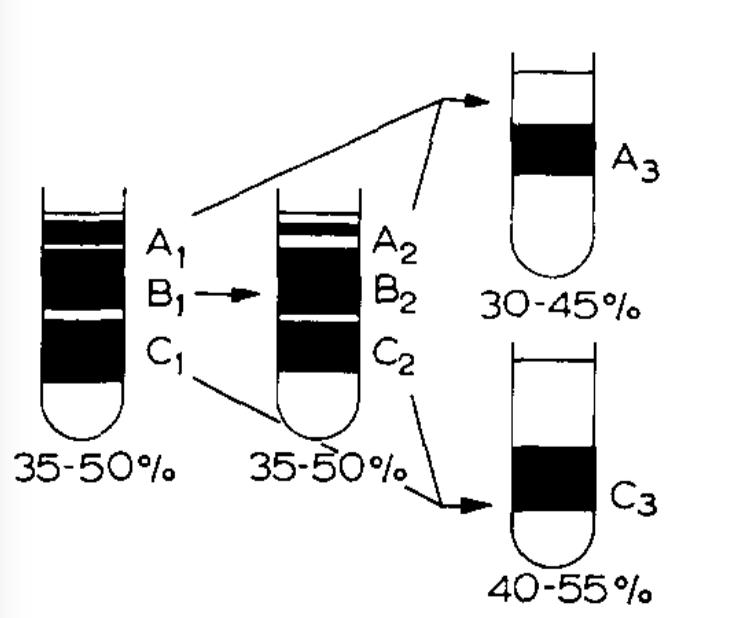 Miura fig. 1