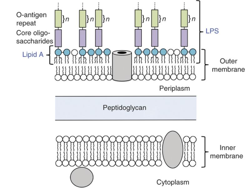 Membrane-png