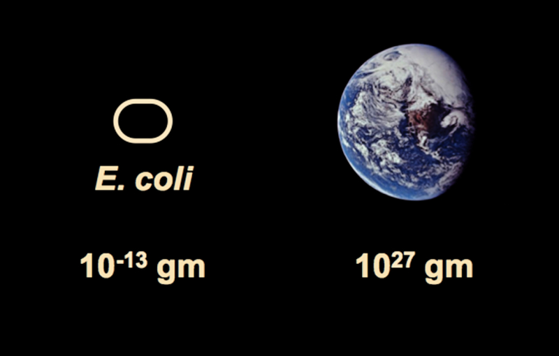 Fig.1.EcoliEarth