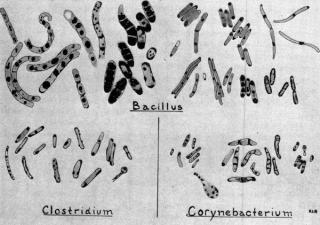 Fig.1.LipidDroplets