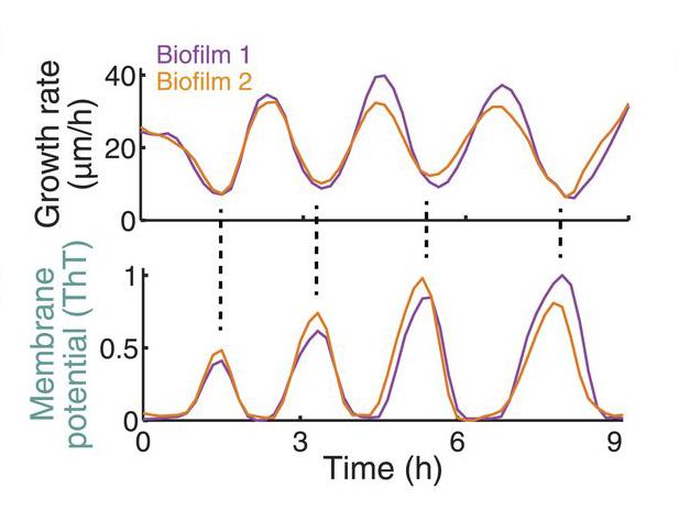 Fig.3.Oscillations