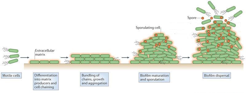 Fig.1A.Oscillations