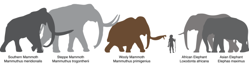 Mammoth_elephant_comparison
