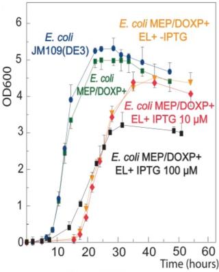 Fig. 4 Lipids