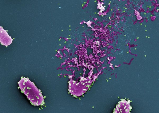 Phage-attack-violet_green-2