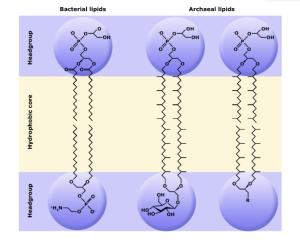 Fig. 1 Lipids