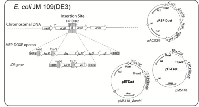 Fig. 2 Lipids