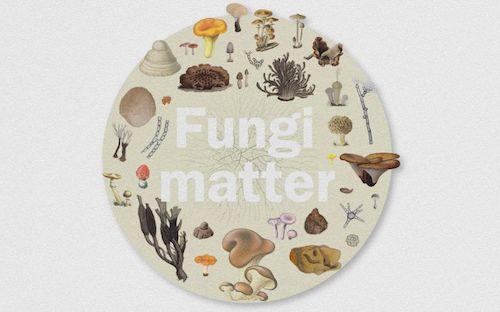 Fig.1 Fungi Report
