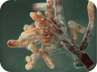 Friedns and parasites