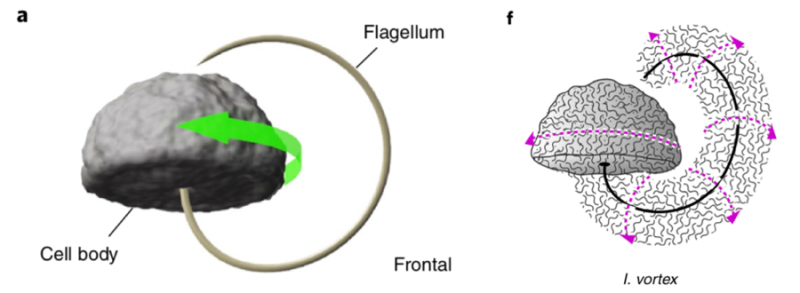 Fig 7