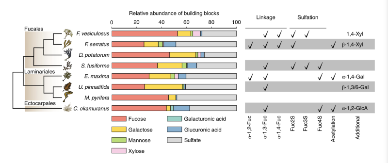 Fig. 1 - fucoidan diversity