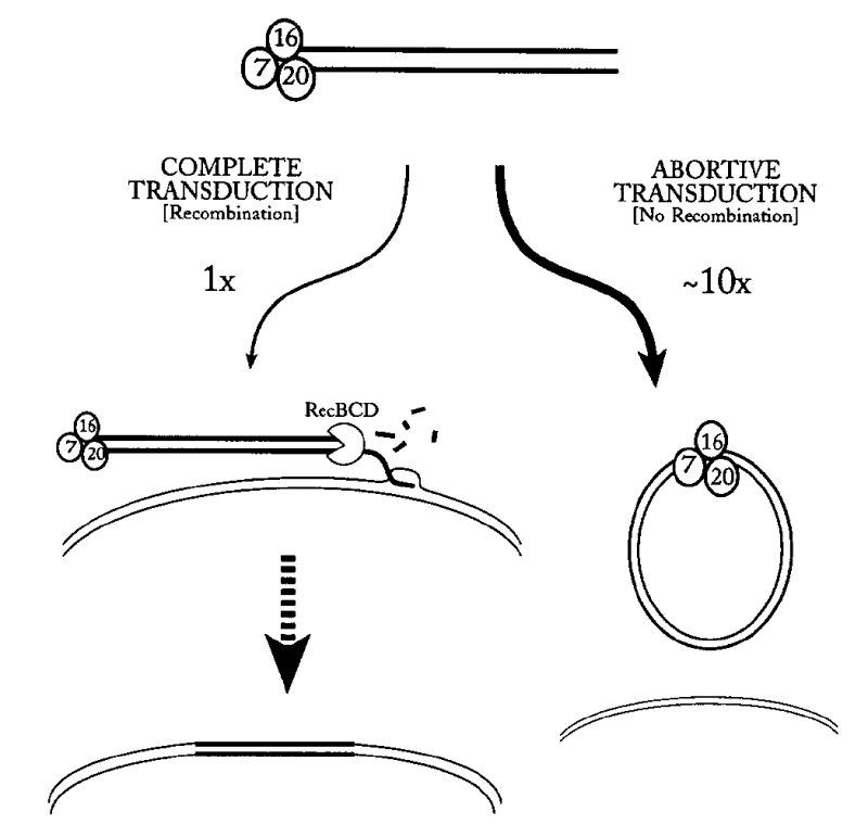 Fig.3.Transduction