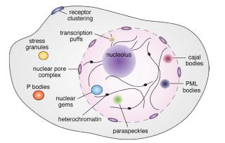 Fig.1.Dps-DNA