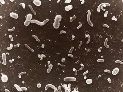 Fig.1.Microbe