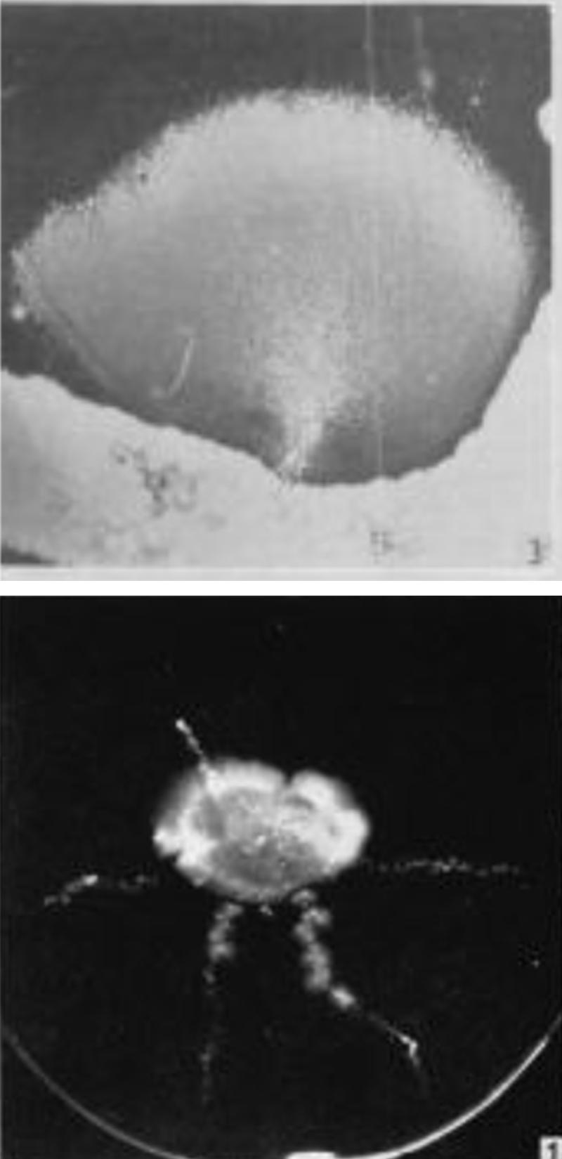 Fig.2.Transduction