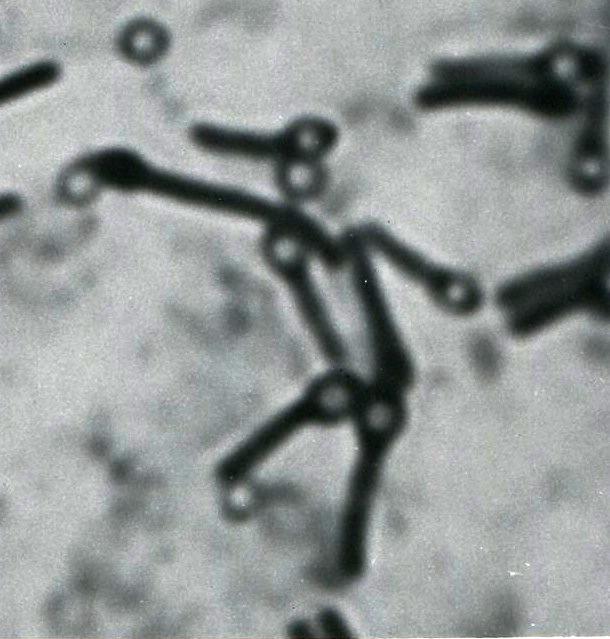 Bacterial Hail Mary